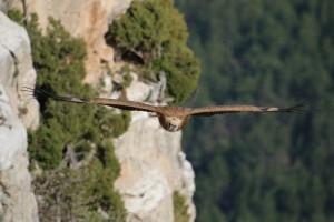 Découverte : vautour
